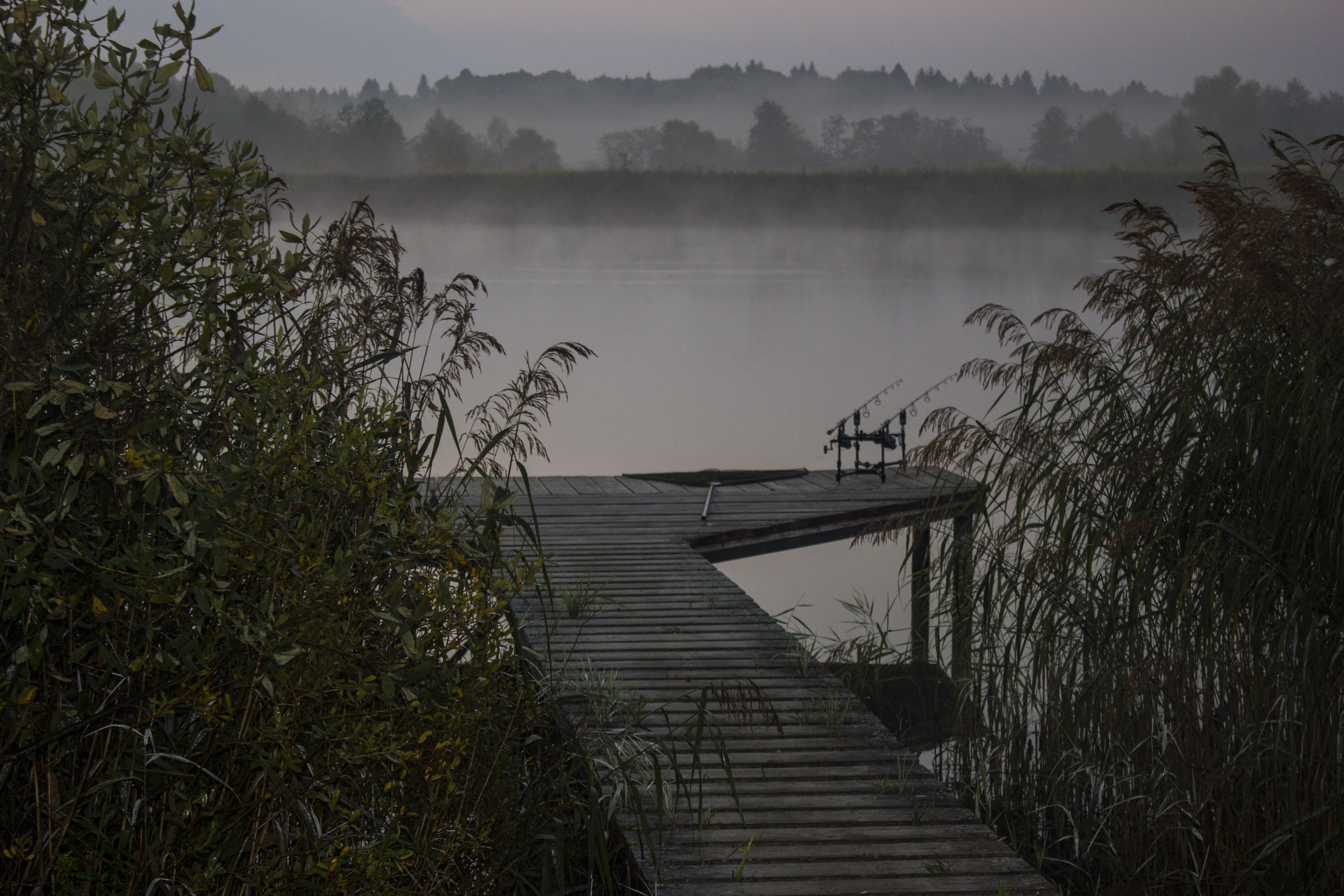 Утро на карповом водоеме